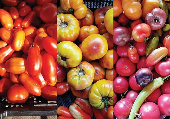 Recipes for a bumper crop of tomatoes this year!