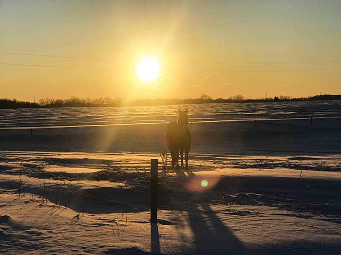 "It would seem that Minnesotans have survived the miniature ""polar vortex"" that hit late last week, bringing frigid winds and snow accumulation to many states that call the Midwest home. Wright County saw mixed amounts of snowfall throughout the..."