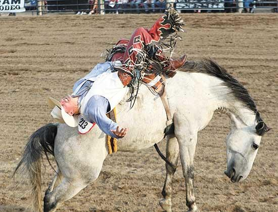 Last year, Tate Schwagler of Mandan, North Dakota, held on strong during the bareback riding competition on the opening day of the PRCA Buffalo Rodeo. This year's rodeo celebrates 65 years, and is June 20-22. Buy tickets online or in Buffalo off...
